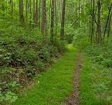 dantewada-forest